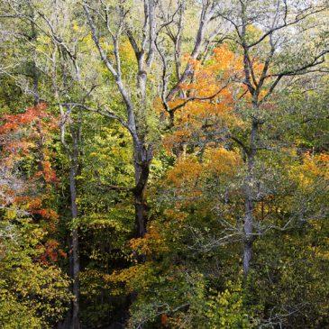 Höstens vackra färgexplosion