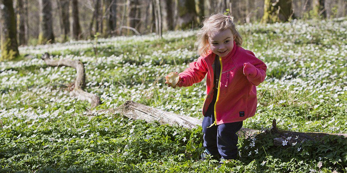 Välkommen till våren! Vitsippsbacke vid Gunnebo - 15 minuter från centrum