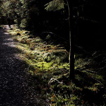 Vandra Härskogen