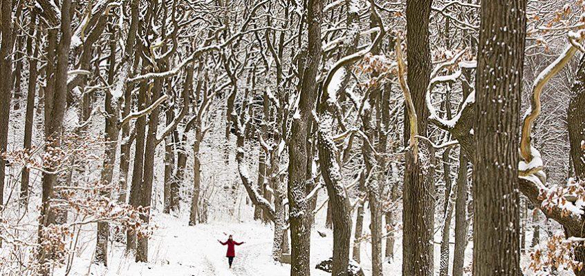 Våra vackraste vintervandringar