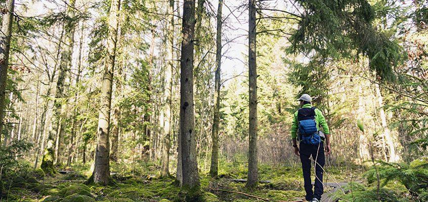 Vandra Skändlaberget 5 km