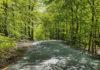 Vårtips: 5 vackra bokskogar
